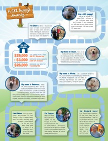 Service Dog Training Process