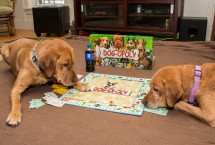 Cal & Carnie - Dogopoly - Dog's Day Off 2017 (3) Photo by Dave Osberg
