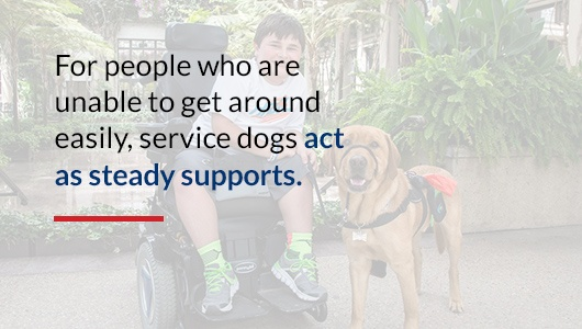 Physical Support Service Dog