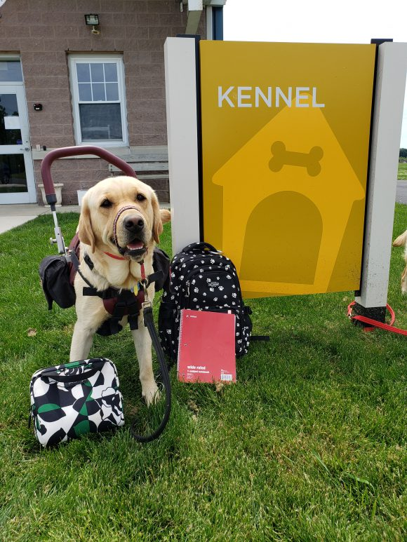 service dog leaving the kennel