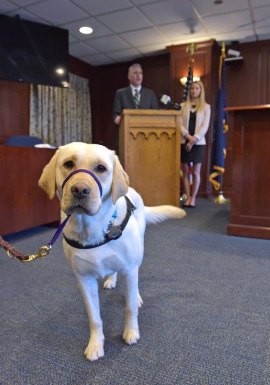 courthouse companion dog