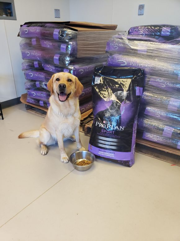 service dog sitting next to bags of dog food