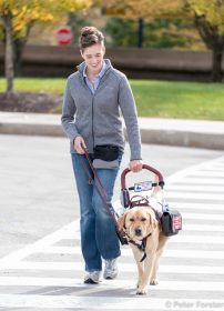 Service Dog Helping Person Walk
