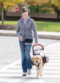 Service Dog Helping Person Walk
