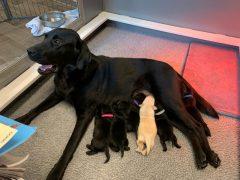 Mom Dog & Pups