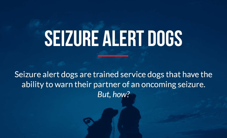 Service Dogs for Seizure Alert