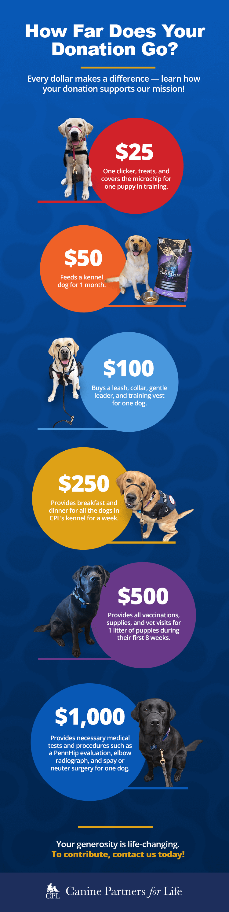 Donations Infographic